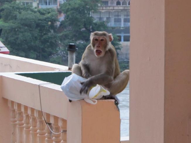 Hırsız komşumuz suç üstü yakalanınca bize bağırmaya başlıyor, hem suçlu hem güçlü :)