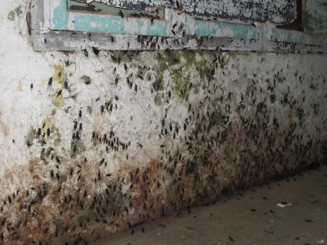 Lumbini'nin korkunç böcekleri...