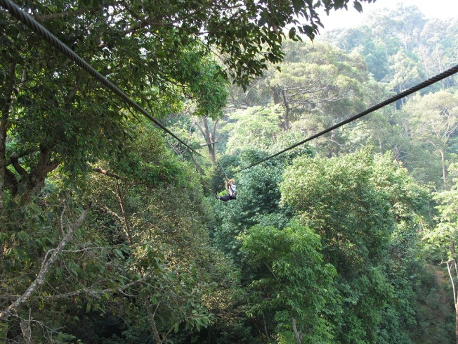 Orman Uçuşu (nam-ı diğer Jungle Flight)