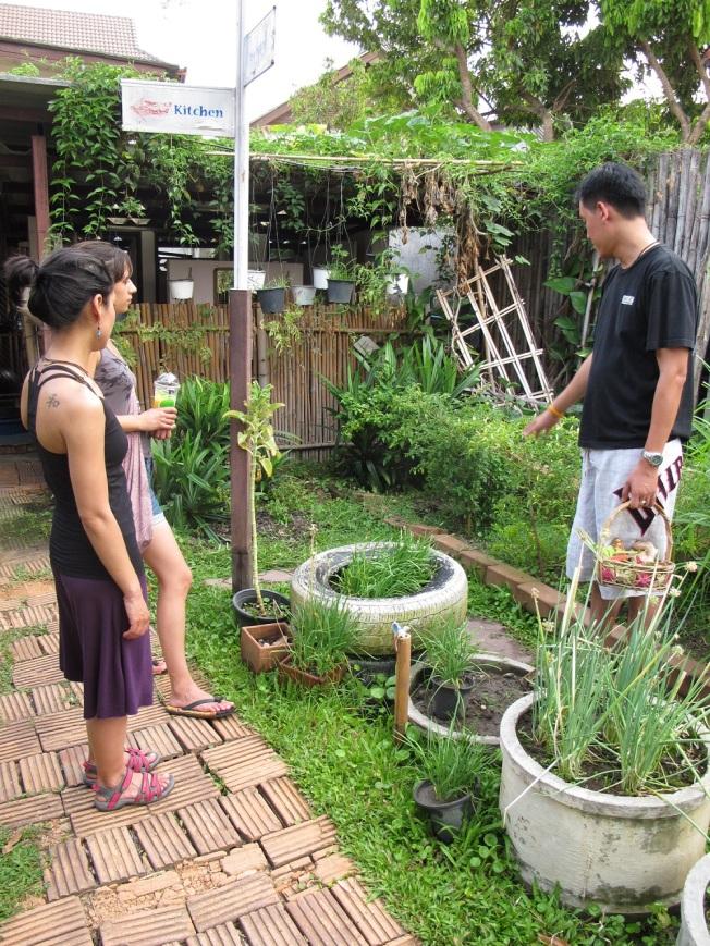 Yemek pişirmeye başlamadan önce kursun bahçesinden taze bitkiler topluyoruz
