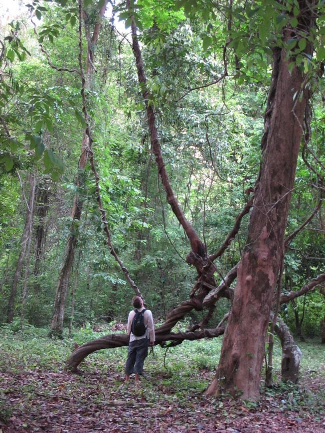 Kong Lo Mağarası'nın bulunduğu park