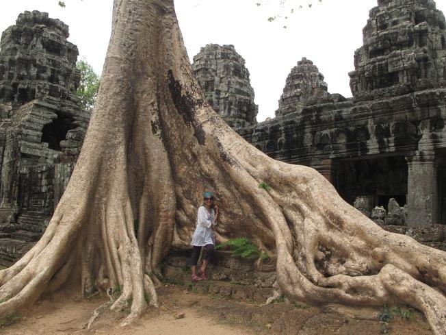 Angkor'un asırlık dev ağaçları