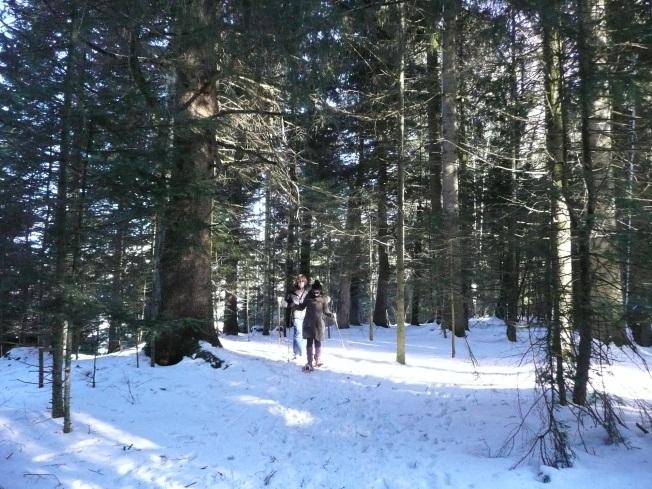 Ormanda kar yürüyüşü